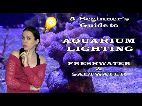 Aquarium Lighting - Everything You Need To Know In Freshwater, Saltwater And Plated Tanks