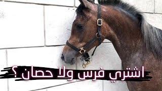 اشتري حصان ولا فرس ؟ فلوسي ماتكفي اخذ مهر صغير ؟!