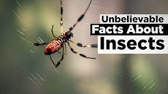 Unbelievable Facts About Insects