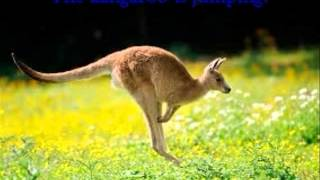 Celia: Kangaroo Thumbnail