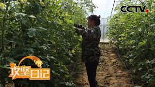 《攻坚日记》 20200528 和乐村里和乐事(3)|CCTV农业