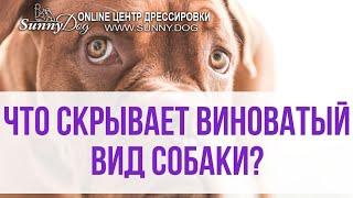 Что скрывает за собой вид виноватой собаки? Чувствует ли собака себя виноватой?