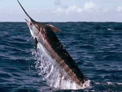 Cabo San Lucas Fishing Charters | Voted Best Fishing In Cabo San Lucas