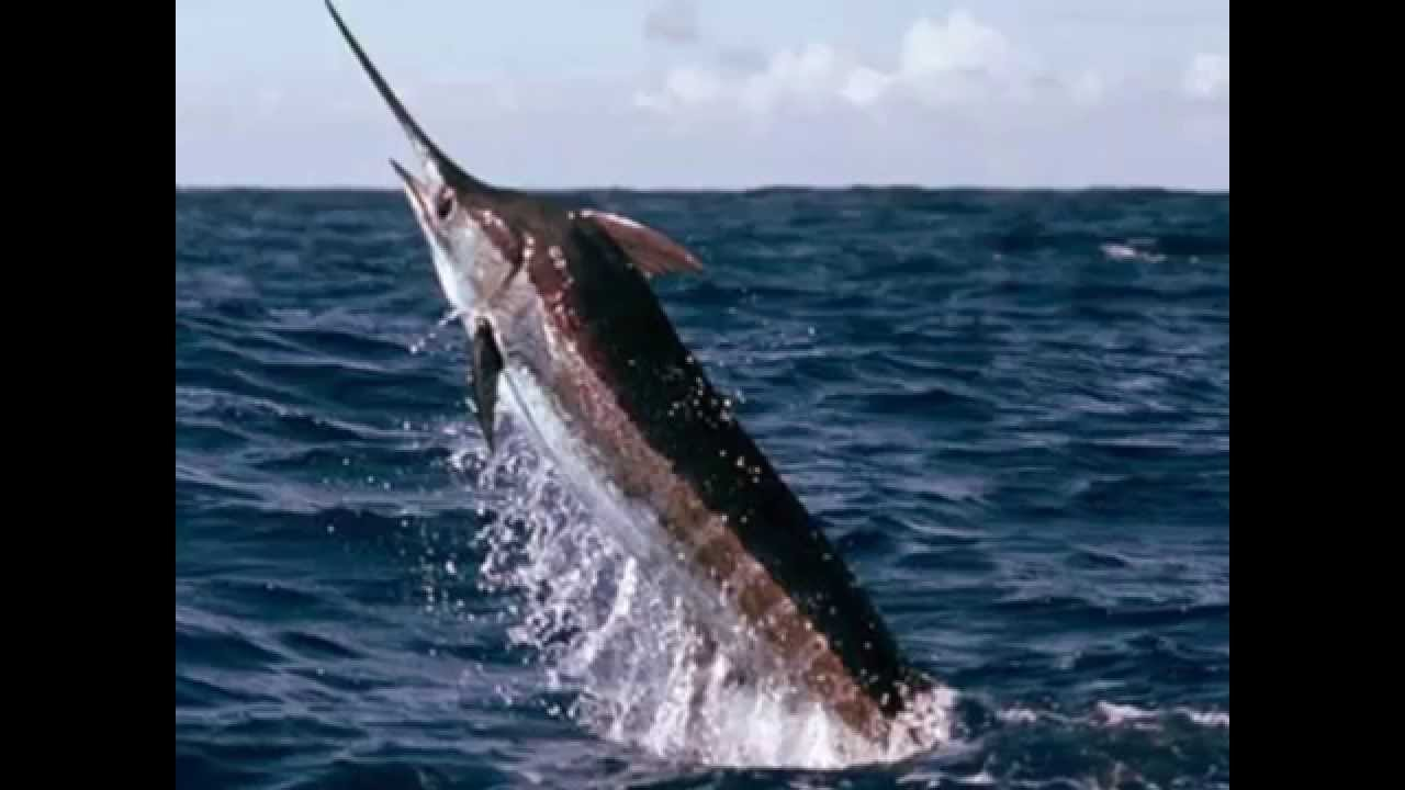 Cabo san lucas fishing charters voted best fishing in for Cabo san lucas fishing charters