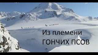 «Из племени гончих псов». -HD- Документальный фильм об уникальной гонке на собачьих упряжках