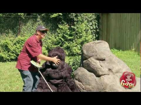 Blind Man Walks Into Gorilla Exhibit