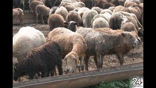 Фермер из Альметьевского района хочет производить мясные деликатесы