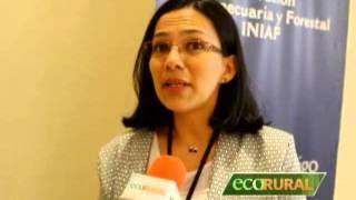 Pyricularia en Brasil