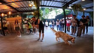 Nat & Texas the English Setter Dog Show