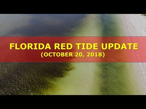 RED TIDE UPDATE (GULF & ATLANTIC COASTS) || October 20, 2018