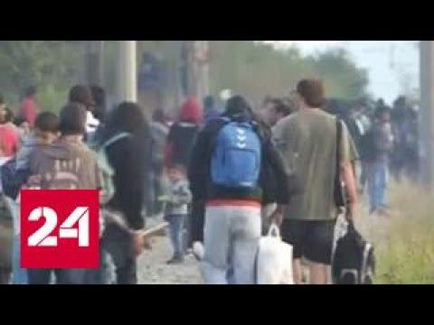 Украинская семья в Германии стала сирийской и получила статус беженцев