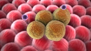 Human Physiology - The Specific Immune Response: Characteristics of B and T Cells