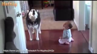hund bewacht totes herrchen