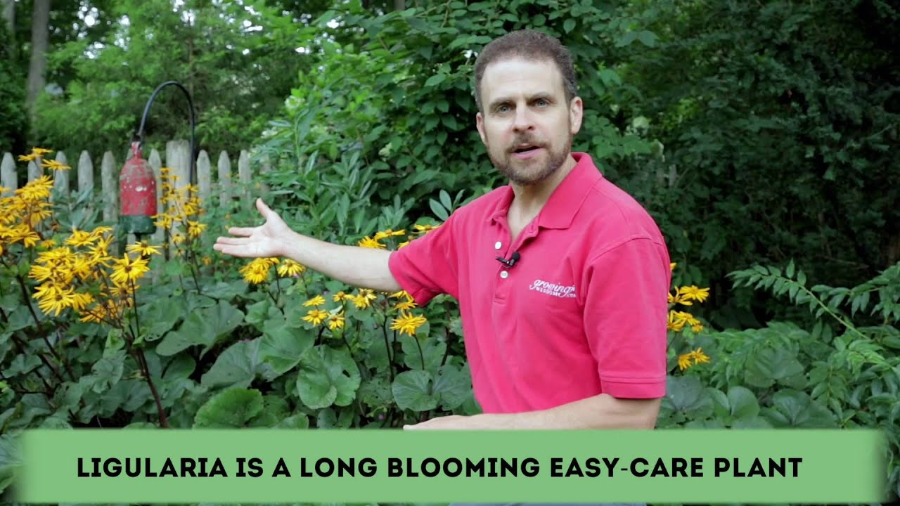 Easy To Care For Long Lasting Plants In Your Garden Youtube