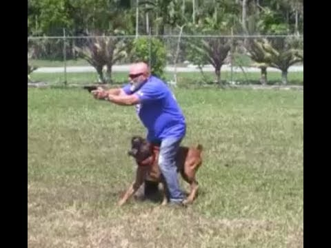 Ultimate Control for Police & Military dogs!
