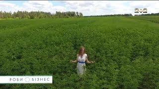 Як українці легально заробляють мільйони на коноплі