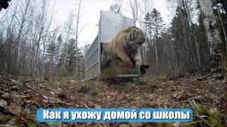 ПРИКОЛЬНЫЕ ВИДЕО | ТОП ПОДБОРКА | Funny videos | Выпуск #301