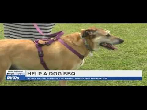 CDJW Help a Dog BBQ For The Animal Protective Foundation 2018 - Albany-Saratoga Speedway