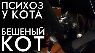 ПСИХОЗ У КОТА  БЕШЕНЫЙ КОТ / КОШКА