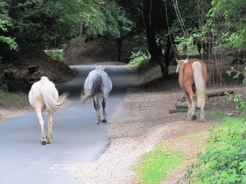 New Forest Country Walk - Fordingbridge - Woodgreen - Hale - Godshill round