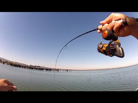 Ultralight Pier Fishing: Lunch Break Smelt and a Savage Unhooking