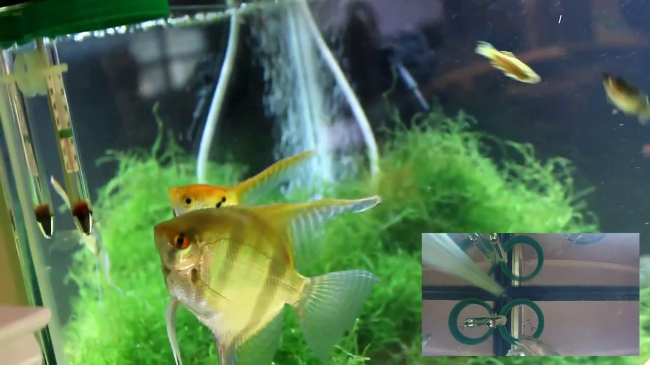 Diy fish feeding ring large diameter youtube for Fish feeding ring