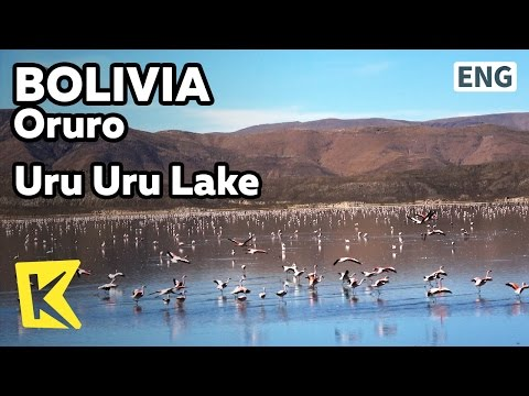 【K】Bolivia Travel-Oruro[볼리비아 여행-오루로]오루로 호수의 홍학/Uru Uru Lake/Flamingo/Altiplano