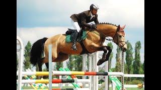 Ат оюндары - кыргыздын кан-жанына сиңген спорт