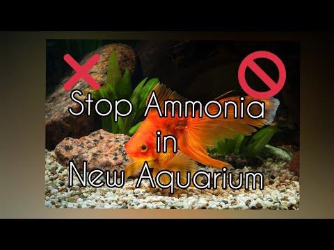 AMMONIA In Aquarium - HOW TO FIX IT FAST !? NEW  Fish Tank