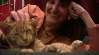 Adopting a Kitten... or Two