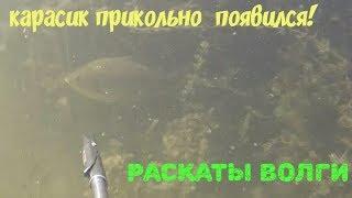 Небольшой карасик на подводной охоте: прикольное появление!
