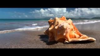Four Seasons Nevis - Sea Turtle Conservation