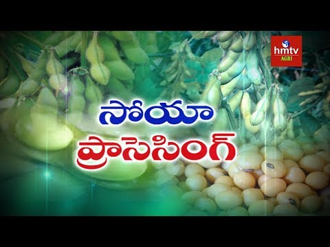 Soybean Processing Guide By Mynampati Sreenivasa Rao | Food Processing | hmtv Agri