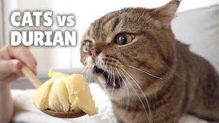 Cats vs Durian