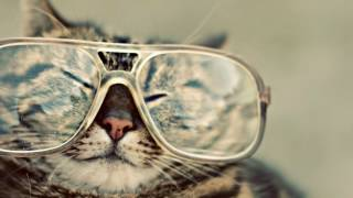 LDNR Sunglasses Archives