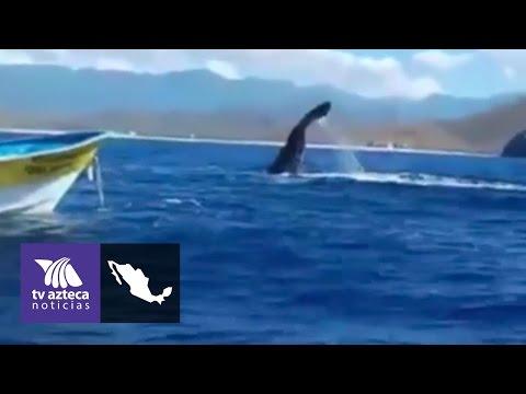 Video: Captan a ballenas en costas de Todos Santos | Baja California Sur