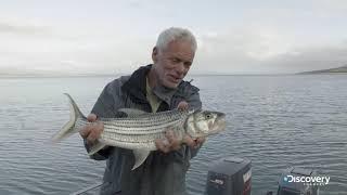 Тигровая рыба | Джереми Уэйд: тёмные воды | Discovery Channel
