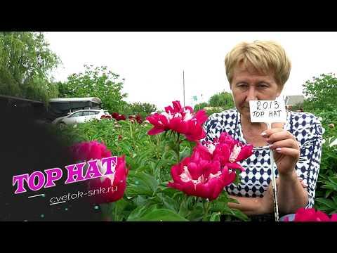 Причудливый пион TOP HAT / Сад Ворошиловой