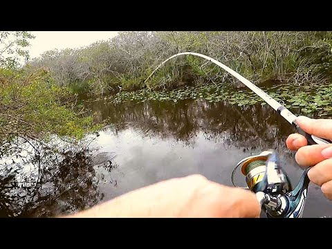 Fishing The EVERGLADES With Nikko Hellgrammites!!
