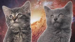Пісня мяу, мяу - годинна версія | Space Cats 1 hour version