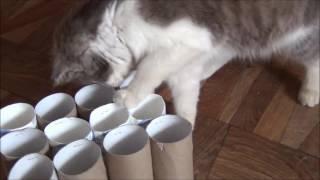"""Игрушки для кошек своими руками. Игра """"12 норок и одна мышка"""" _^.^_  Best toys for cat"""