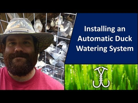 Installing an Automatic Duck Watering System