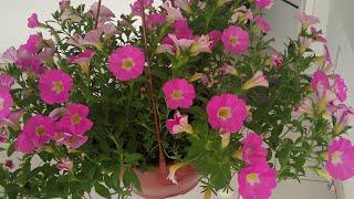 7 Plantas Que Dão Muitas Flores