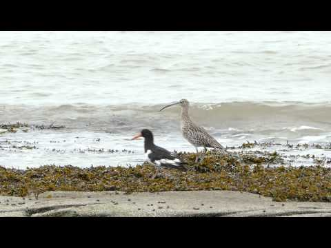 Waders On Hilbre