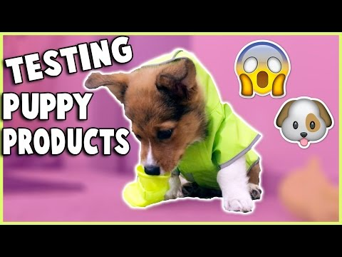 TRYING PUPPY PRODUCTS WITH MY CORGI PUPPY