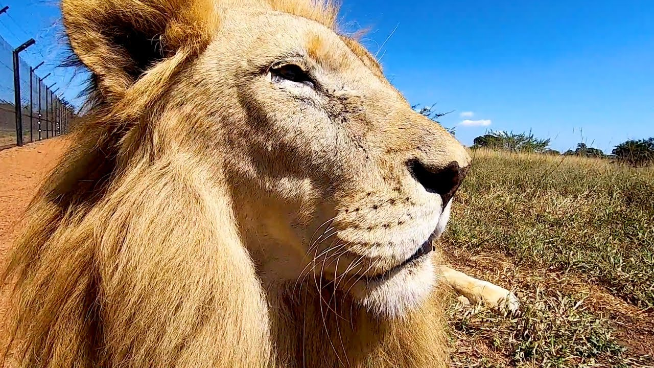 Meet The Characters: Delta, Icarus & Unathi | The Lion Whisperer