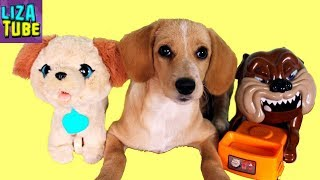 Реакция Щенка на игрушки Собаки \ LizaTube