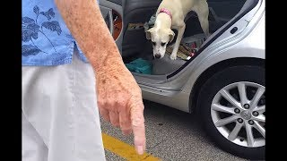 dog left in hot car, and then this happened..
