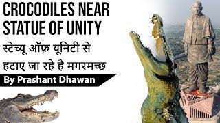 Crocodiles Near Statue Of Unity स्टेच्यू ऑफ़ यूनिटी से हटाए जा रहे है मगरमच्छ Current Affairs 2019