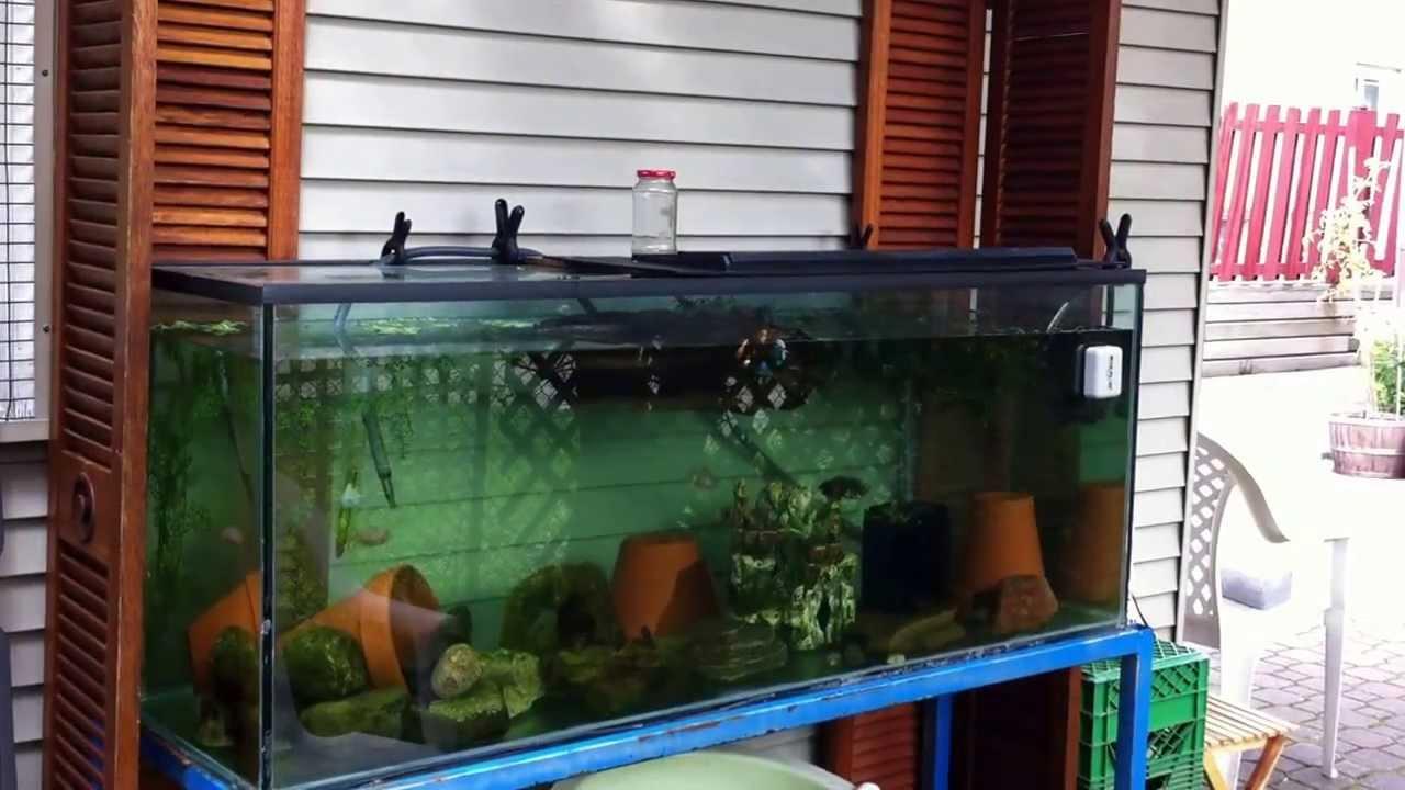 Outdoor aquarium 110 gallon toronto on canada aug 8 2013 for Outside fish tank